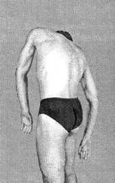 упражнения грудной отдел