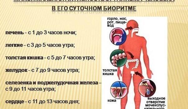 биоритмы